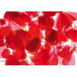 Fotomural RED PETALS FT-0043