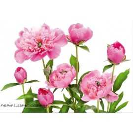 Fotomural PINK PEONY FT-0115