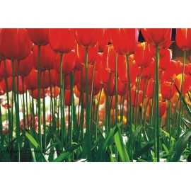 Fotomural RED TULIPS FT-0137