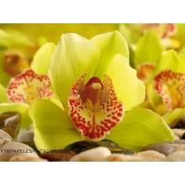 Fotomural YELLOW ORCHID FT-0153