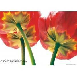 Fotomural FLOWERS FTM-0495