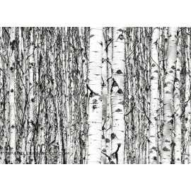 Fotomural BIRCHES FTM-0801